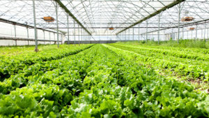 Importance of Reverse Osmosis System for Farms